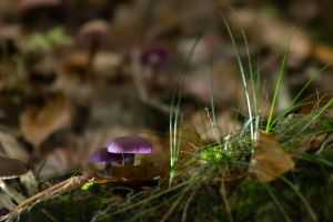 mushrooms21 by hubert61