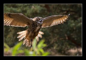 Great Horned Owl II by L3NN4RT