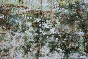 Mould texture 1 by Quinnphotostock