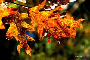 Fall by Lucy777
