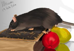 Rat with book and fruit by fiffiluren