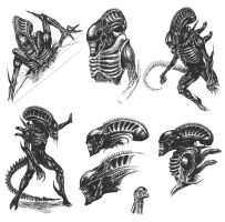 Aliens Sketches by Bugstomper86