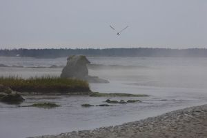 Fog and Seagull by XxQuothTheRavenxX