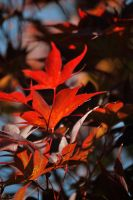 Autumal Remembrance by humanoid1
