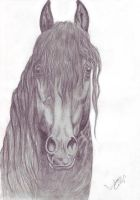 Friesian portret by LindaColijn