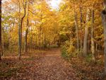 Autumn Forest Landscape 20 by FantasyStock