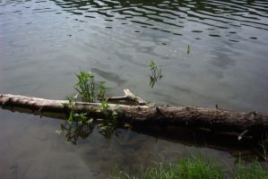 Tree in the water by Proxile