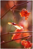 wilted leaves 3 by wildtea