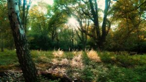 Forest of Fjaer by phoenixfeatherxlight