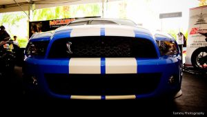Shelby Mustang by Tommy-YS