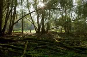 borderline swamp by Pippa-pppx
