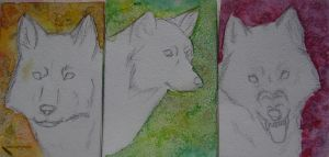 ACEO by Bledhgarm