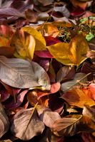 Leaves by xisidoro