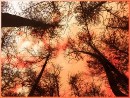 Burning trees by Andenne