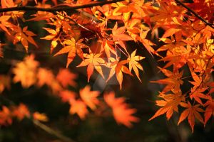 Autumn in Japan by theblindalley