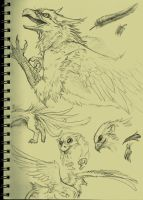 Griffon sketch practice by TheUmbraArtist
