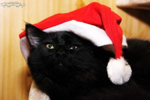 black catmas by Wintertale-eu