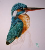 Kingfisher by Nuskatli