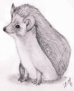 Hedgehog by Haltiamieli