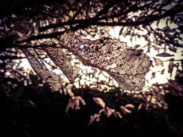 Crystal Leaves by Eccentric17