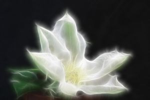 Fantasy FX Flower Stock 6 by Moonchilde-Stock