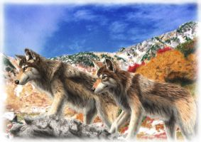 Wolf's Mountain by SheltieWolf