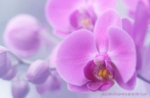 Pink Orchid by PassionAndTheCamera