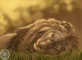 The lion sleeps tonight by Kivuli
