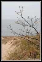 Spring in the Dunes by kessalia