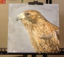 Red Tailed Hawk by Smileyface102g