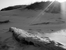 Washed Ashore II by Blue-to-the-Bone