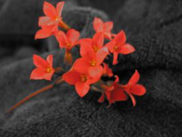 Red Flower by BelegStrongbow