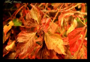 Autumnal plant by ShlomitMessica