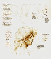 Anatomy Head Study by SILENTJUSTICE
