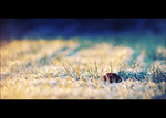 Winter frost II. by snarto