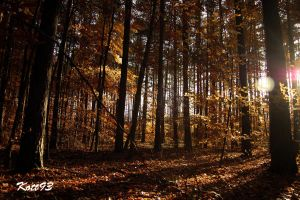 forest in autumn by Kott93