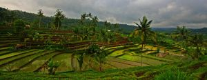 rice terraces bali 10 by worldpitou