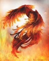 Fire Phoenix by Ainhel