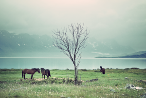 Horses by Varjoaine