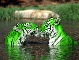Two Green Lovers by EricKamiche