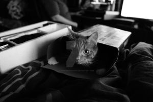 Gizmo in a box by Hyperborean1987