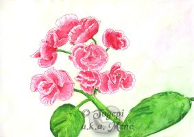 Oma's pink flowers by mene
