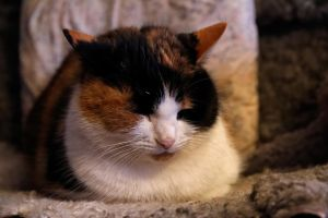 Emma The Cat 2 by Perzec