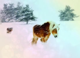 The Winter Horses by SottoPK