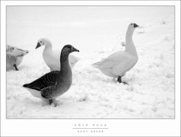 Cold Duck by wulfster