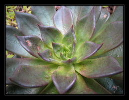 Simply Succulent by natronics