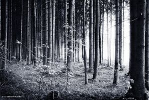 forest 17 by orlibraorli