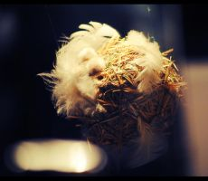 toss the feathers by Voigtlander
