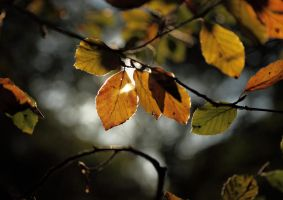 Autumn Colours 02 by scotto