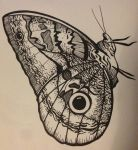 Butterfly by Bagoly